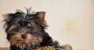 quanto mangia cane taglia piccola
