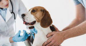 vaccino anti rabbia cane effetti