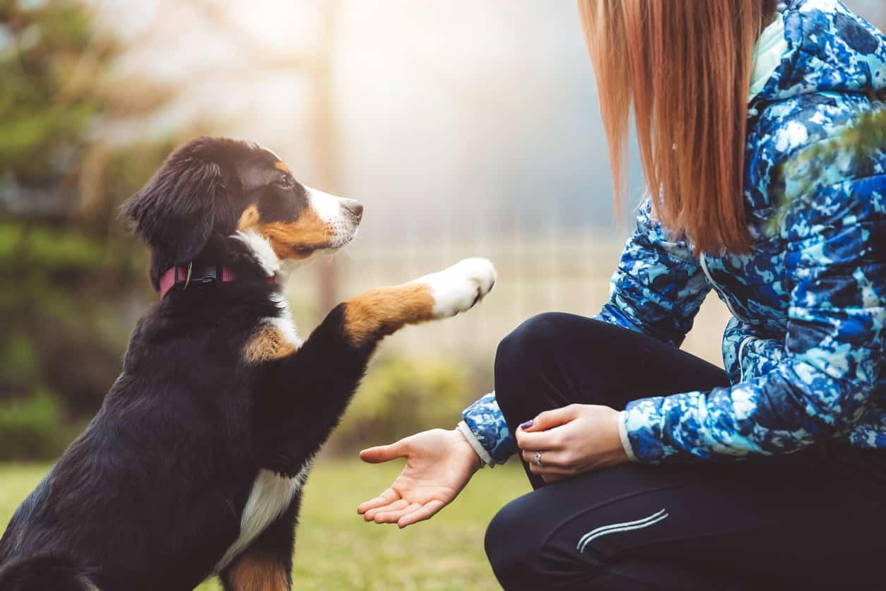 cane insegnare
