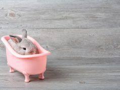 lavare coniglio