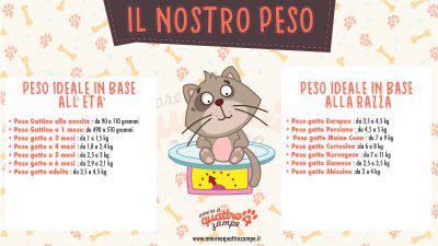 infografica peso gatto