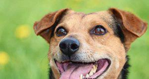 bocca del cane (fonte Pixabay)