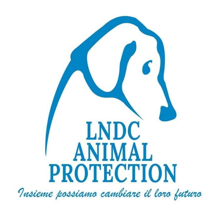 maltrattamenti animali condanne