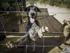 crisi governo animali