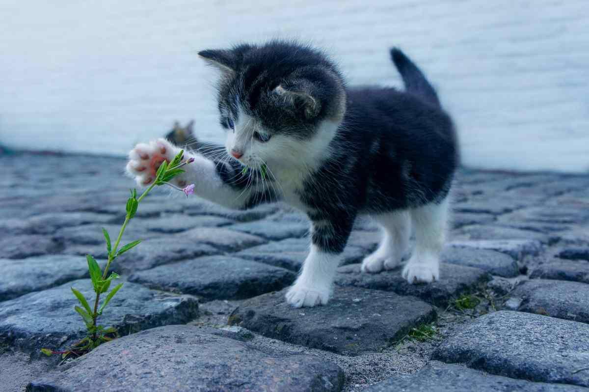 dita del gatto quante sono e come sono fatte le sue zampe