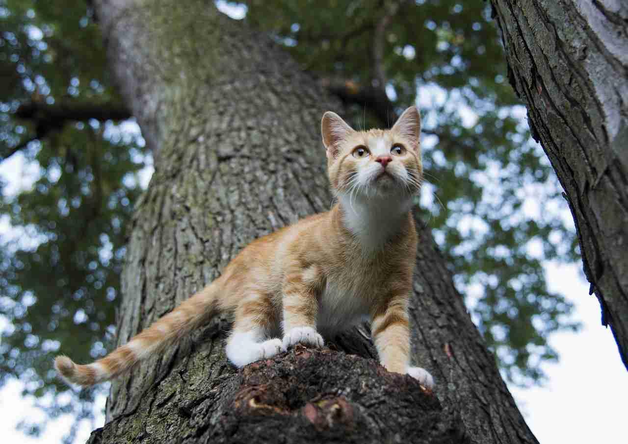 Zampe del gatto