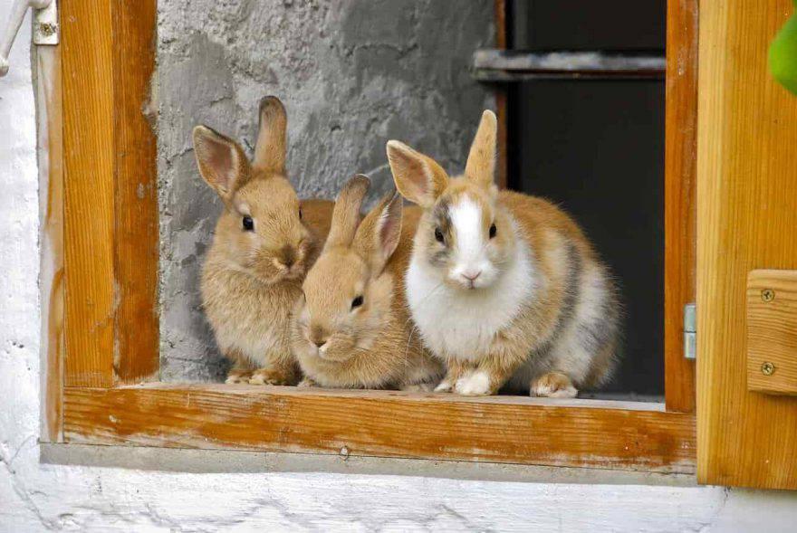 conigli in fattoria