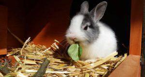 pulire gabbia coniglio