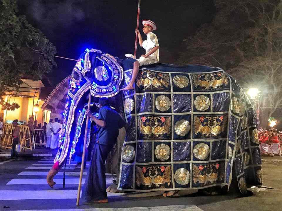 elefanti intrattenimento