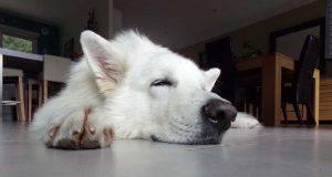 test cane dorme