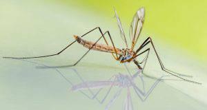 il ciclo vitale delle zanzare e la loro riproduzione