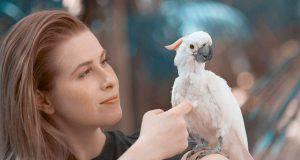 Come addomesticare un pappagallo cacatua: consigli utili (foto iStock)