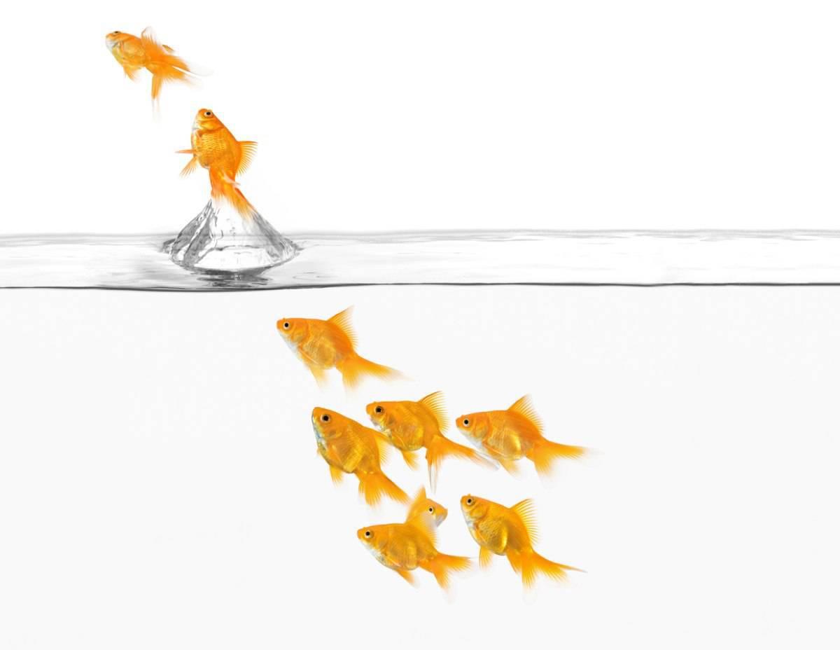 I comportamenti del pesce rosso da non sottovalutare quando sta male (foto iStock)