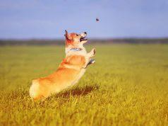 cane mosche