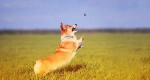 cane mangia insetti