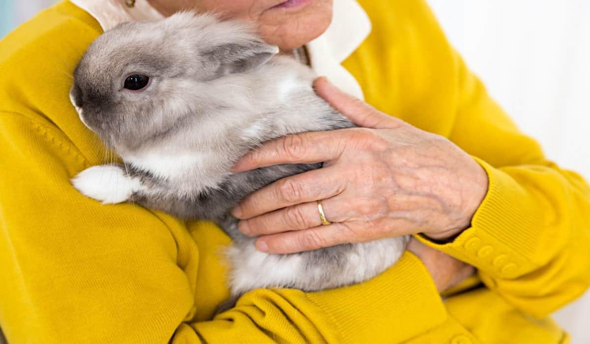 coniglio anziano