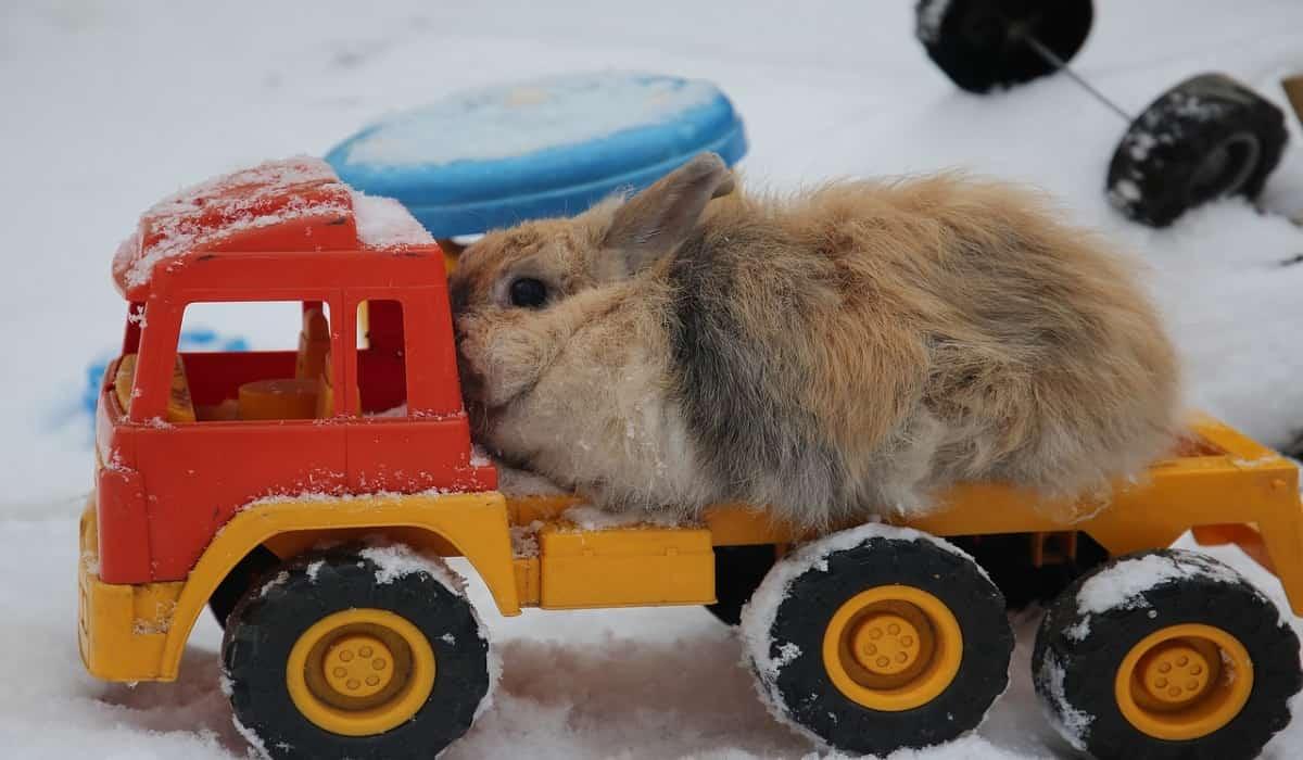 Come proteggere la conigliera dal freddo