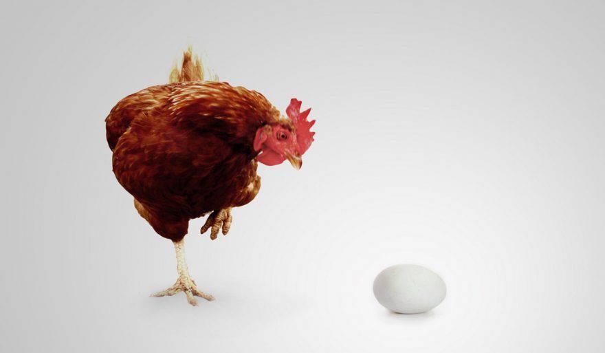 la gallina e luovo