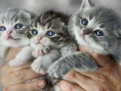 separare gatto