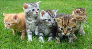 fasi crescita gatto
