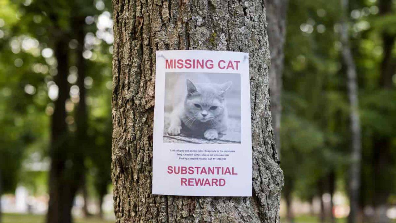 Rete Per Gatti Condominio gatto smarrito: casa fare subito e i consigli per ritrovarlo
