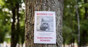 gatto scomparso