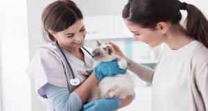 glaucoma gatto
