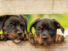 Fasi sviluppo cucciolo cane