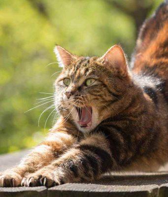 Gatto anziano agitato: causa e cosa fare (foto Pixabay)