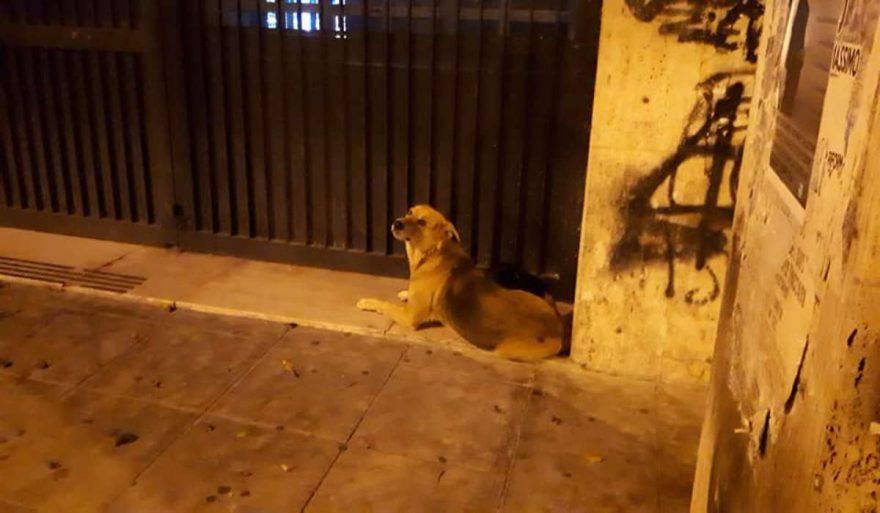cane fedele clochard