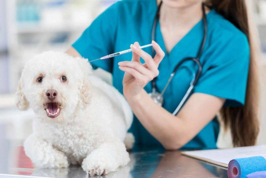 Il cane ha paura del veterinario (foto iStock)