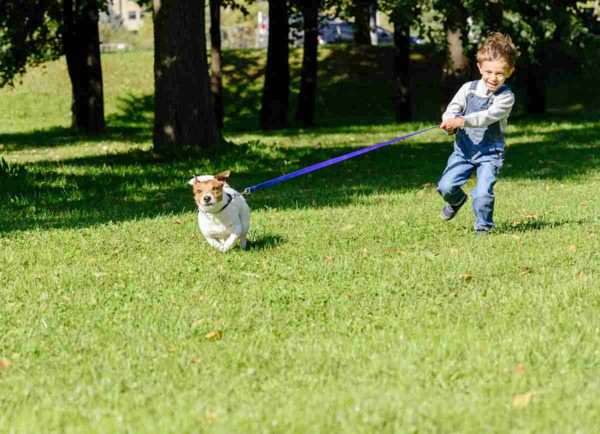 il cane tira al guinzaglio (foto iStock)