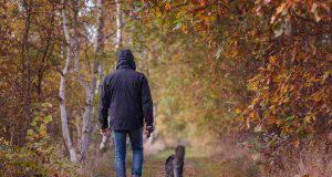 Passeggiare in autunno con il cane: come fare quando piove e fa freddo (foto Pixabay)