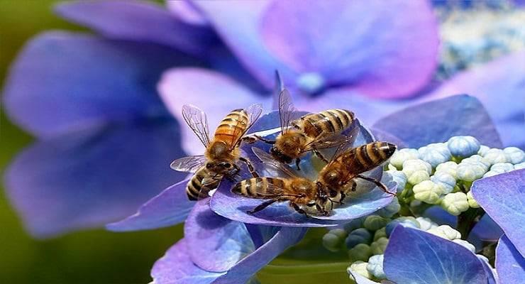 api comunicano
