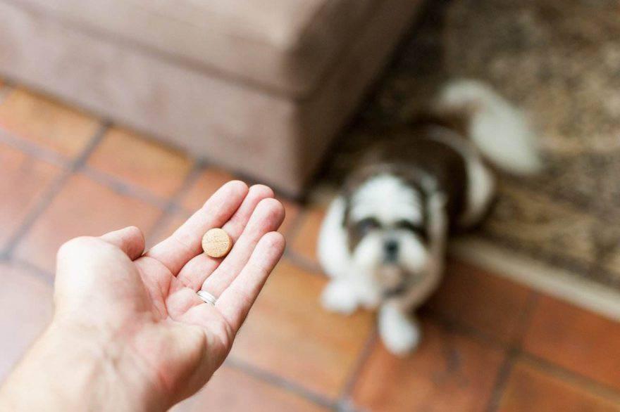 Aspirina al cane