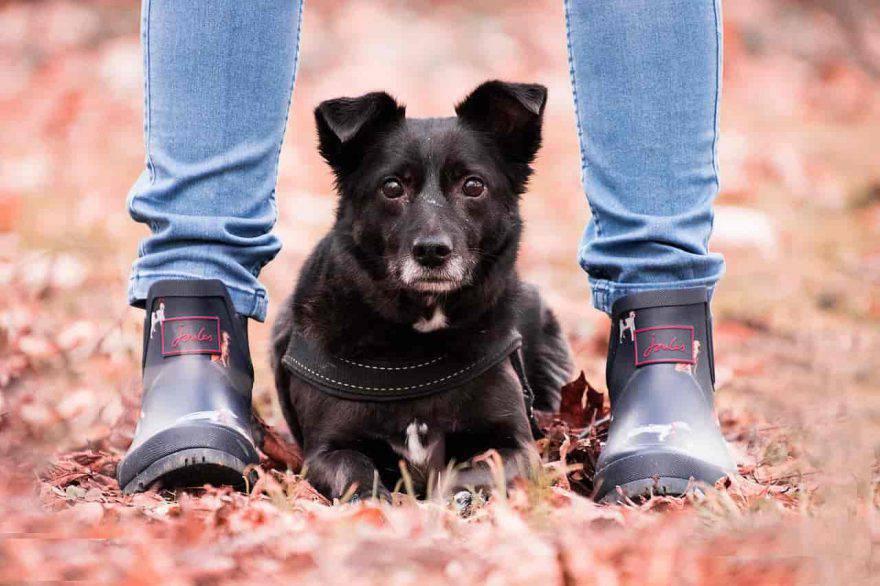 pericoli autunno cane