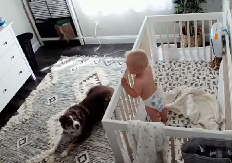 neonati cane