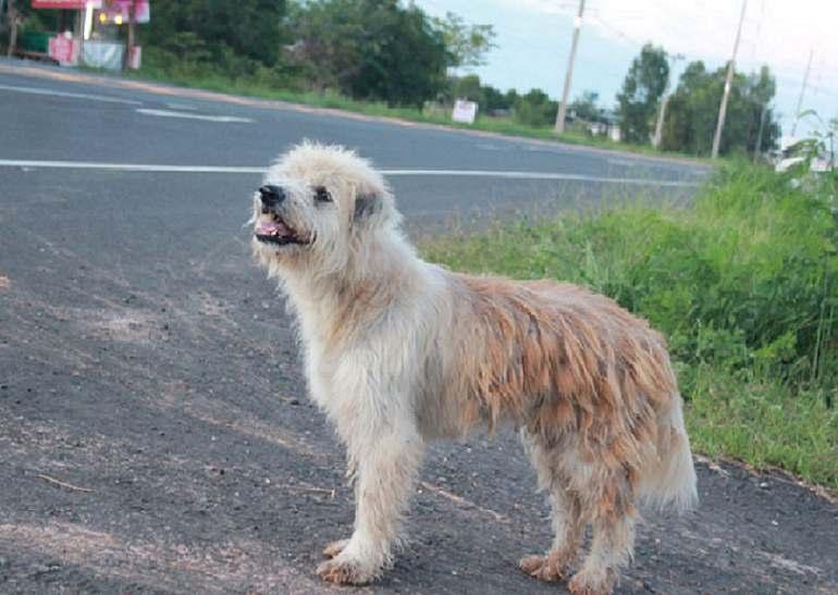 cane aspetta 4 anni famiglia