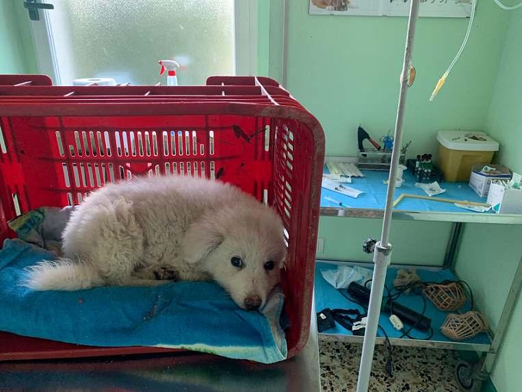 cucciolo abbandonato