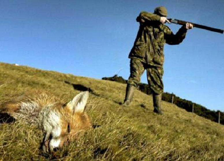caccia avvelenamento piombo