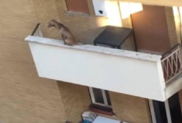 cane cade balcone