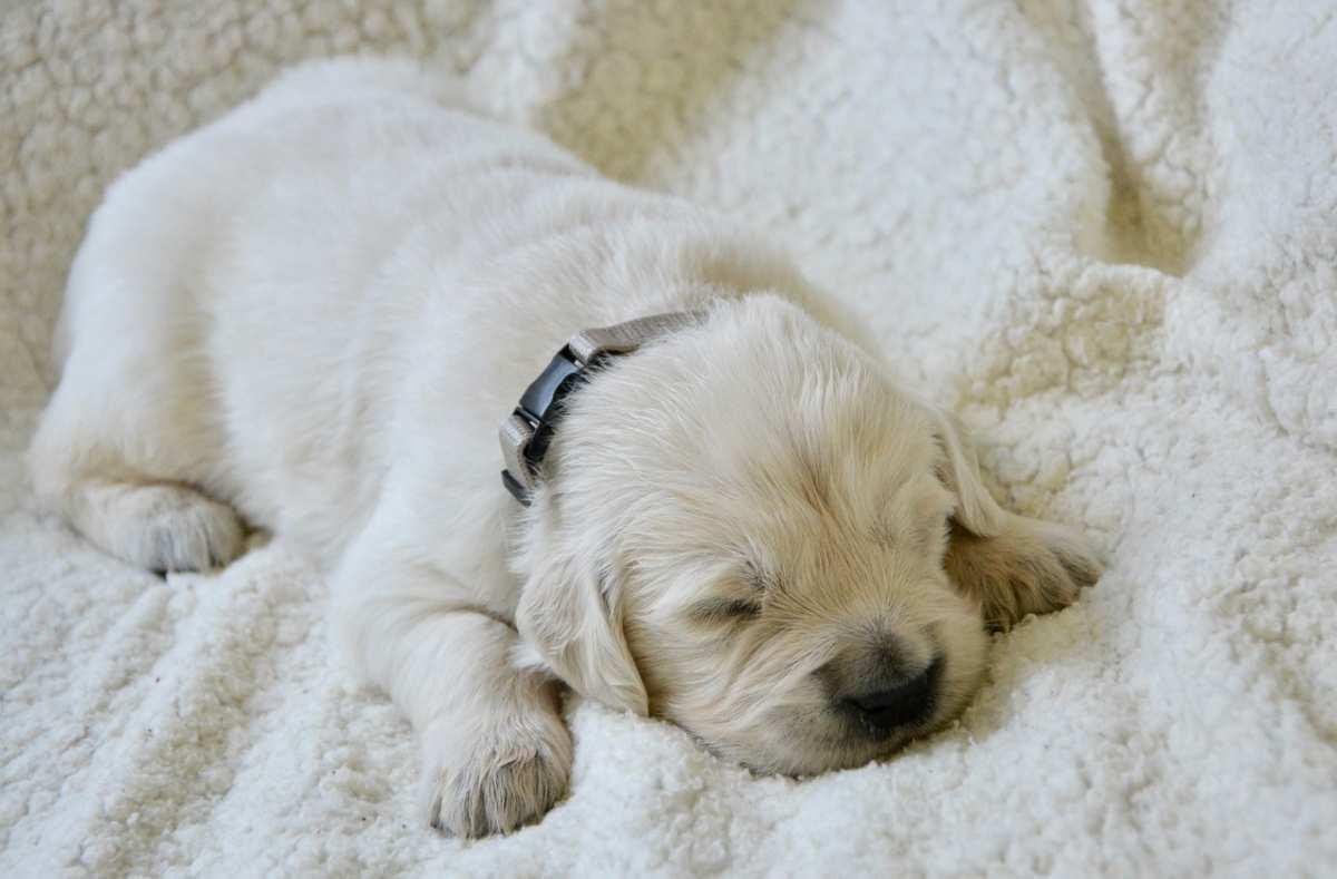 cane dorme a pancia a terra con le zampe larghe (foto Pixabay)