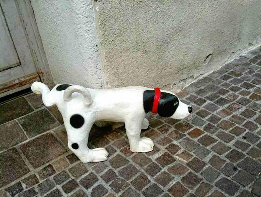 cane che fa pipì