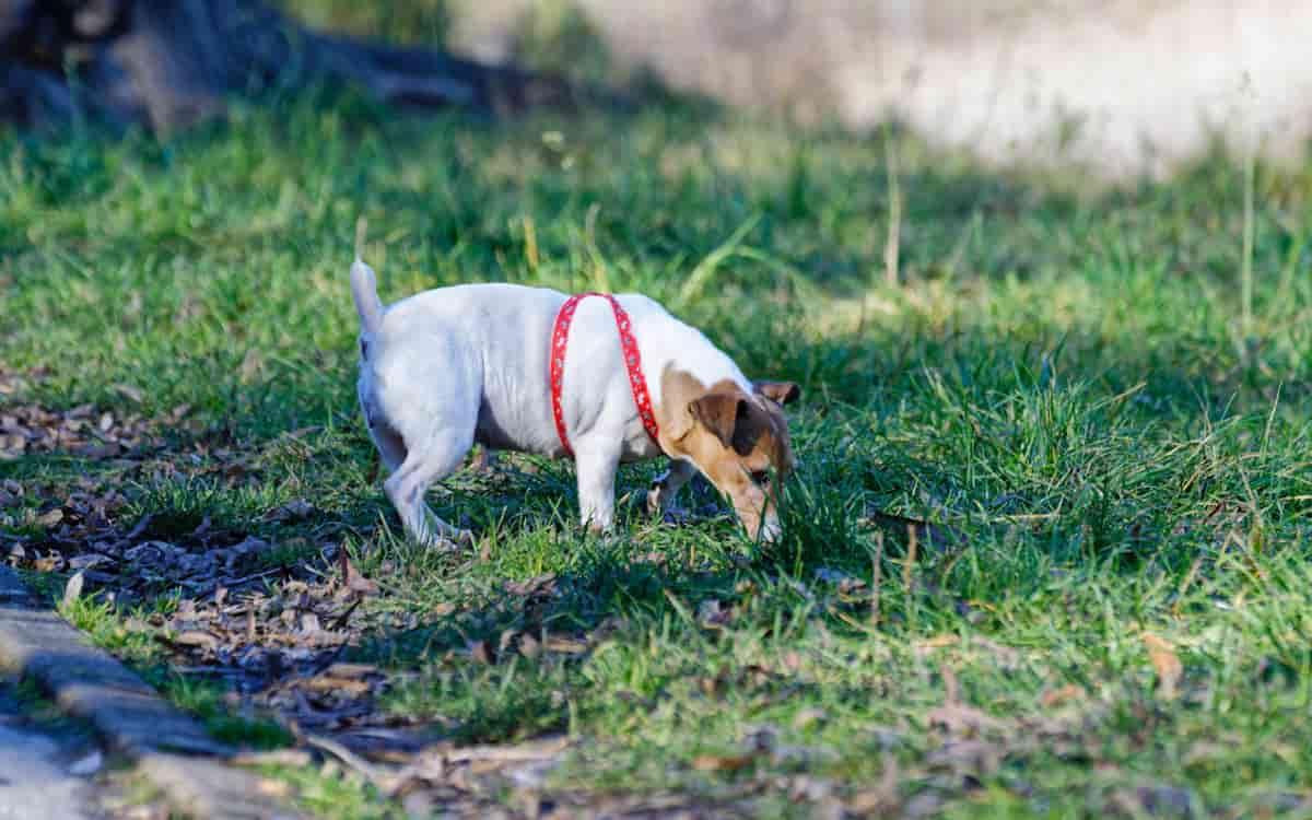 Perchè il cane mangia la terra