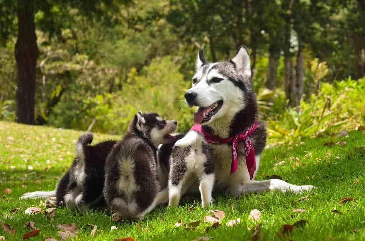 cane ti porta cuccioli
