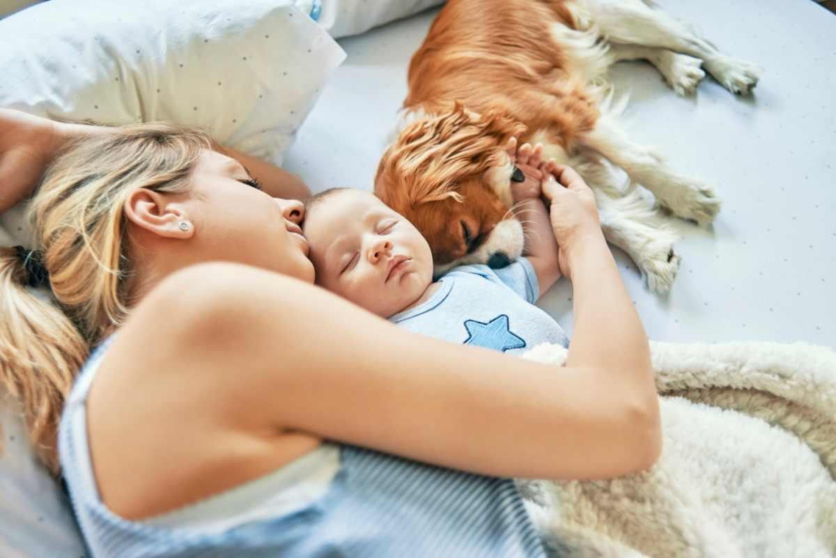 Quando Inizia A Gattonare Neonato cane e neonato in casa: come favorire la convivenza