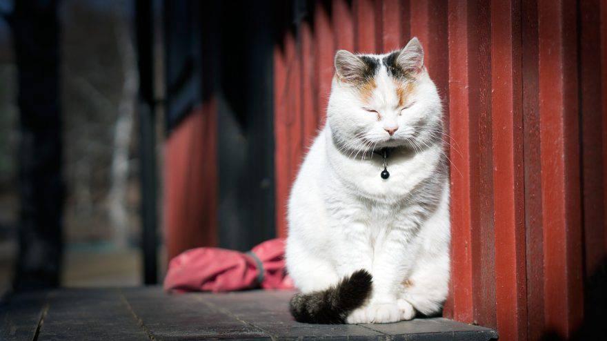 gatto campanellino