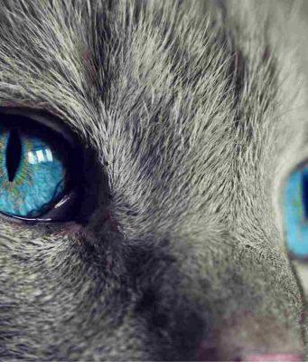 Congiuntivite nel gatto