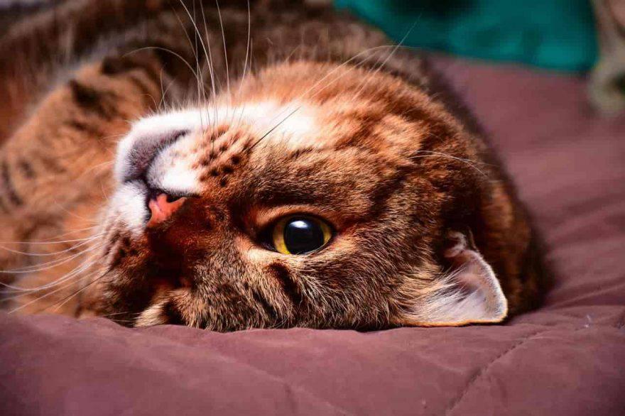 cura gatto dopo sterilizzazione