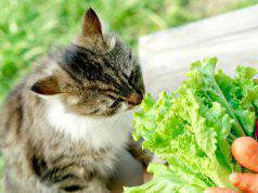 Gatto mangia insalata
